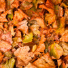 Fuel from fallen leaves
