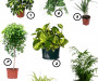 7 plants that can clean the air in your home