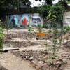 Фруктовий сад і дитячий город у центрі Києва