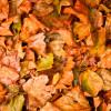 Паливо з опалого листя