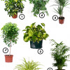 7 рослин, які очистять повітря у вашій квартирі