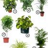 7 растений, которые очистят воздух в вашей квартире
