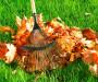 Очистка наружной территории от листьев